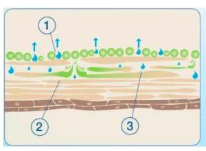 oil penetrating skin